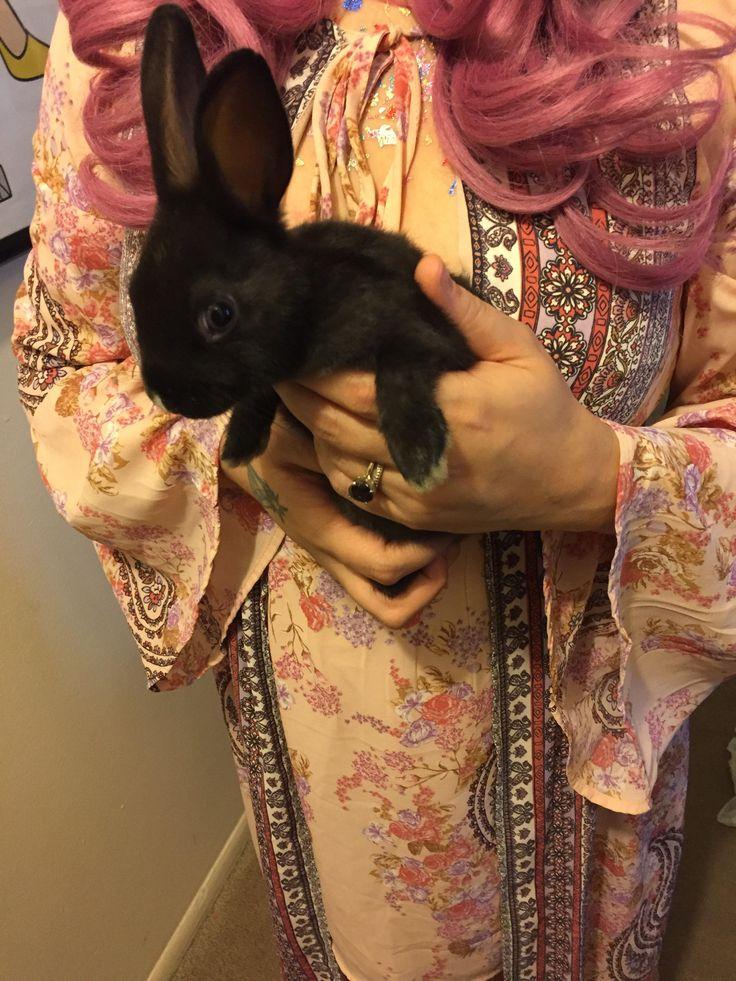 Meet bunny Fufu http://ift.tt/2sfv5TT