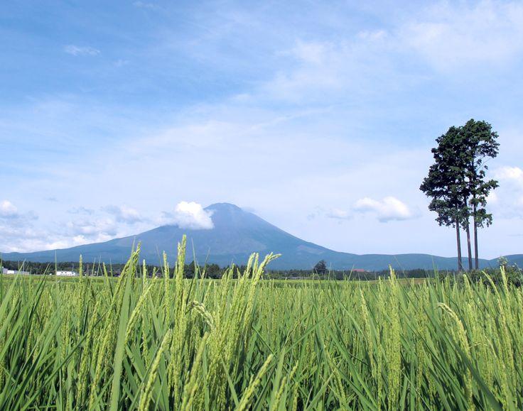 夏色の御殿場田園風景。富士山