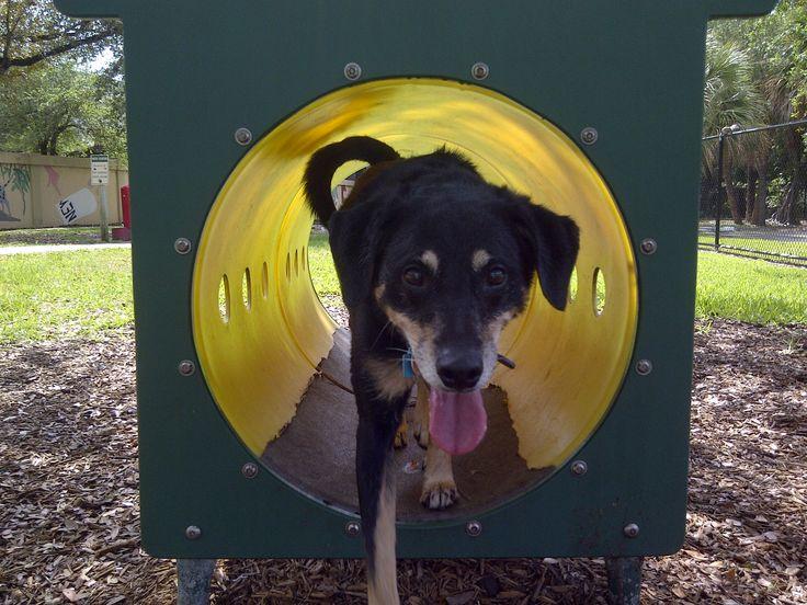 Hollywood Animal Hospital Florida dog tunnel Dogs