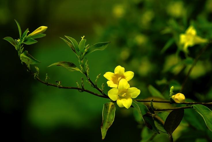 Flowers Blooming On The Island Hilton Head Island
