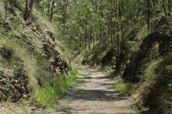 Ferny Grove Rail Trail Walk Samford