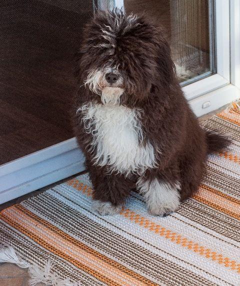A pár hete tartó vedlési időszakban is jól vizsgázik, egyáltalán nem tapad bele a kutyaszőr. Hihetetlenül könnyű takarítani.