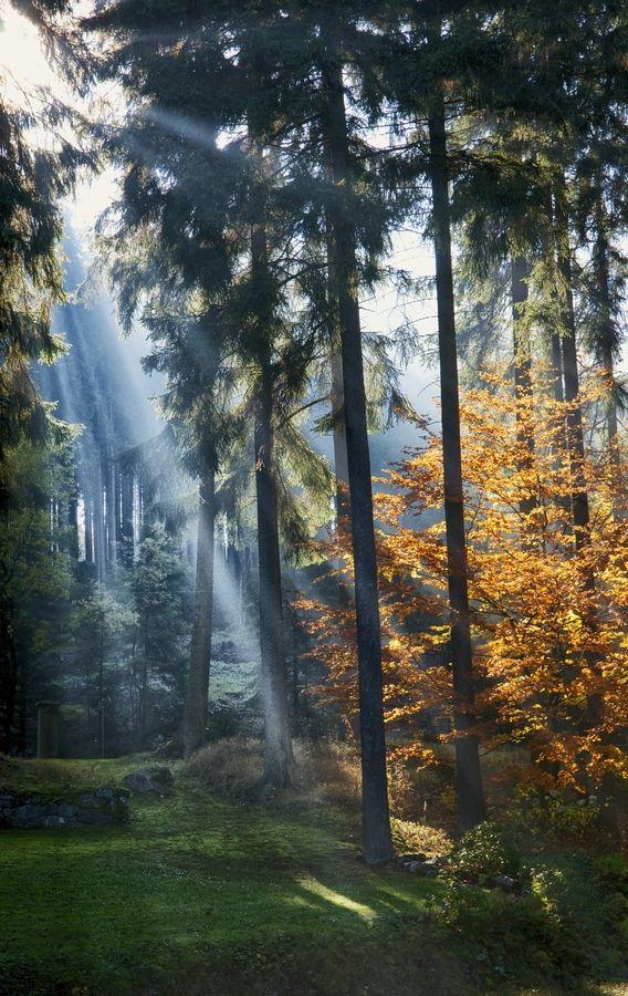 nature   trees   czech republic   marienbad