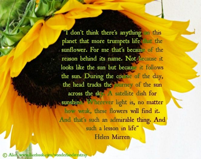 Sunflower quote via Alice in Wonderland's TeaTray at www.Facebook.com/WonderlandsTeaTray