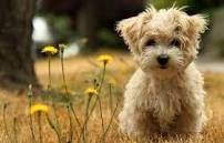 """Webster's Dictionary defines the word """"dog"""" as, """"the single greatest creature that God ever created."""""""