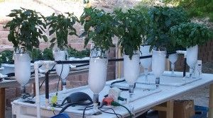 ebb and flow hydroponic system design