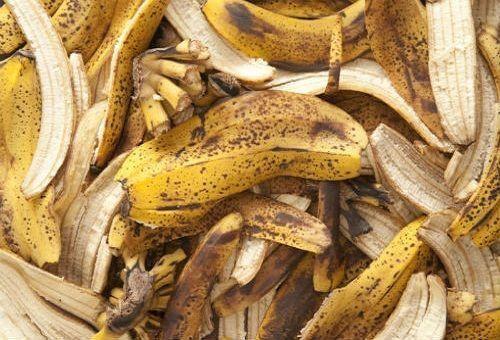 Для активного роста все растения нуждаются в регулярных подкормках. Неплохой заменой магазинным препаратам послужит средство, сделанное на основе банановой кожуры. Банан содержит много питательных эле...
