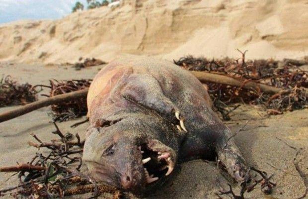 La misteriora creatura che si è arenata sulla spiaggia