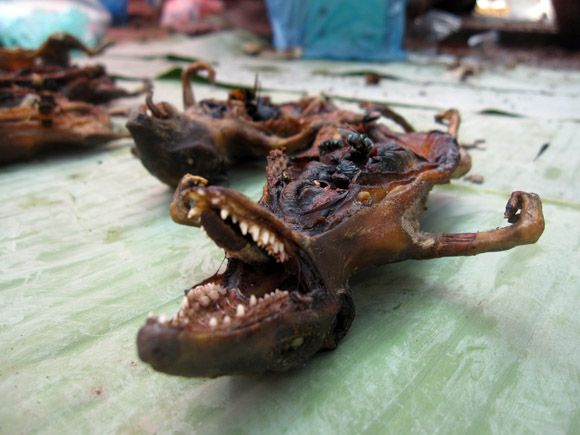 Rat in laos - instructions on how (rather than why!!) to ...