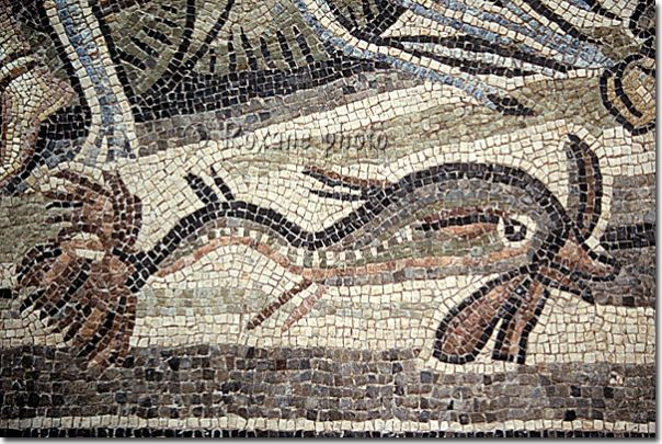 Dolphin detail from Zeugma mosaic