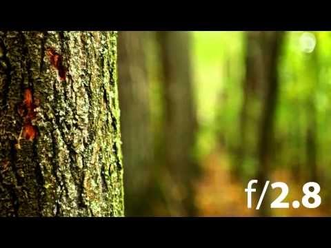 Фотография- Учимся резкости и глубины - YouTube