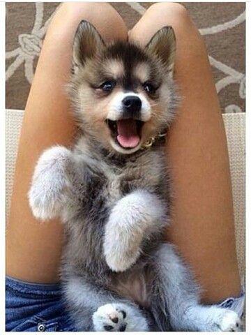 Cute puppy ❤