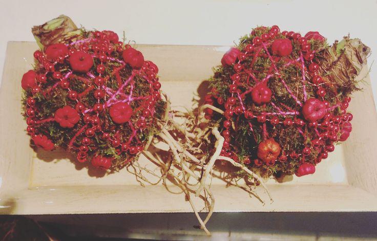 Amaryllisbollen in een mooi kerstjasje gestoken - These two guys are all dressed up for christmas #amaryllis #kerst #kerstmis #christmas #bloemen #bloembol #amaryllisbol #flowers #merrychristmas
