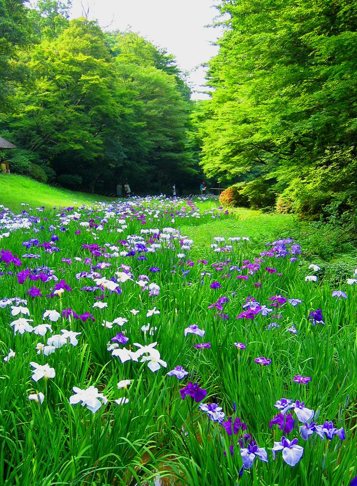 183 best A Meadows images on Pinterest | Wild flowers, Decks and ...