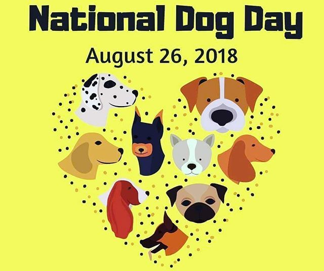 How Are You And Your Dog Celebrating National Dog Day Today I M