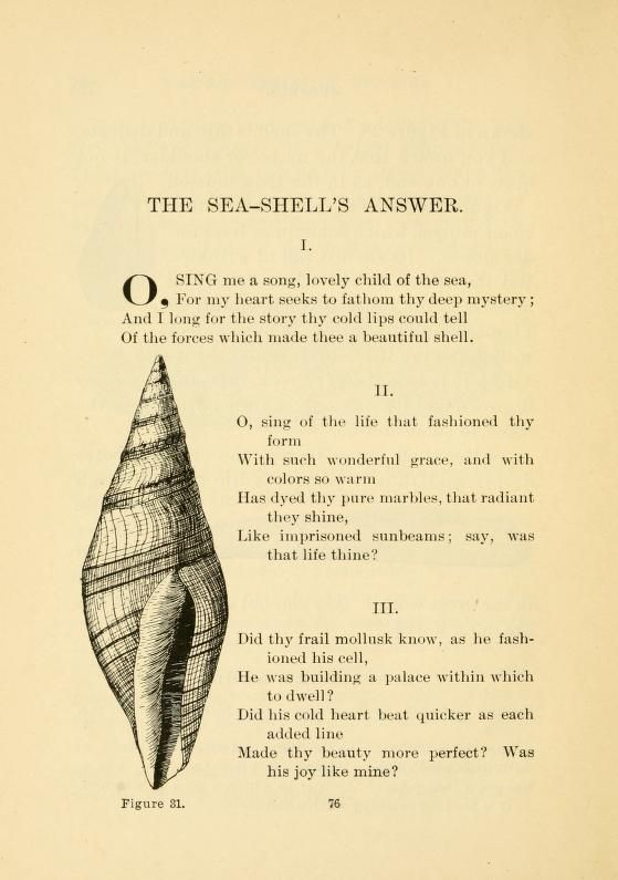 Shells and Sea Life.. FREE contains 200+ pages of stories ...