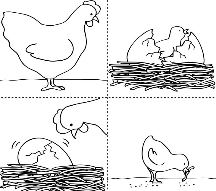 Life cycle of a hen sequencing cards.  There are also lots of other great sequencing activities on this website.