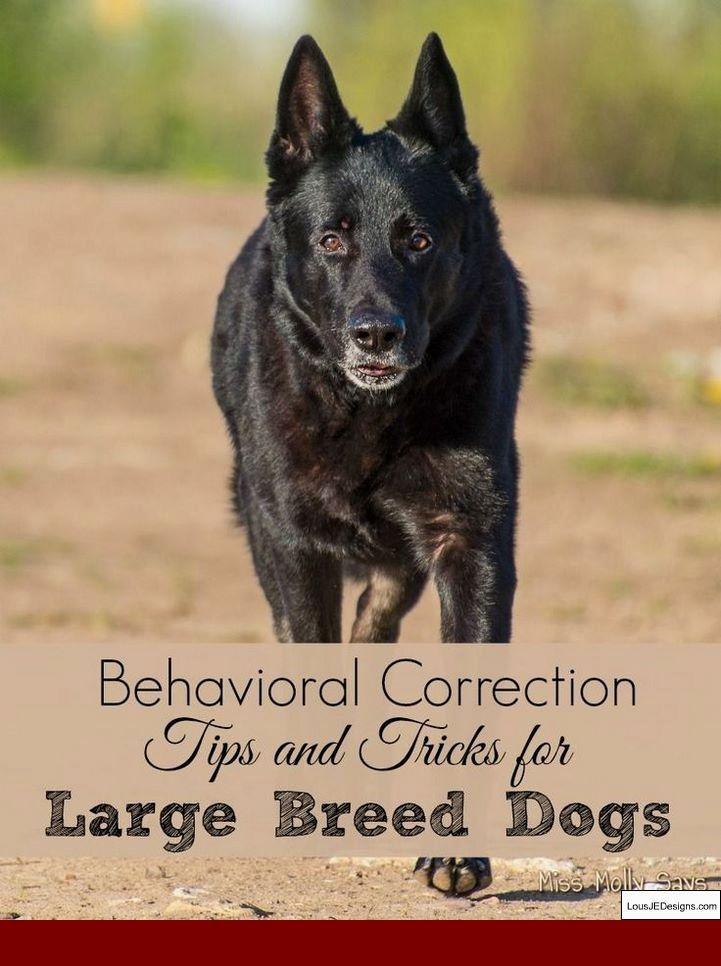 Tips Aggressive Dog Training And Pics Of Toilet Training Tips Dog