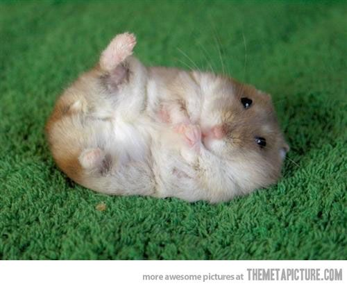 Happy hamster!