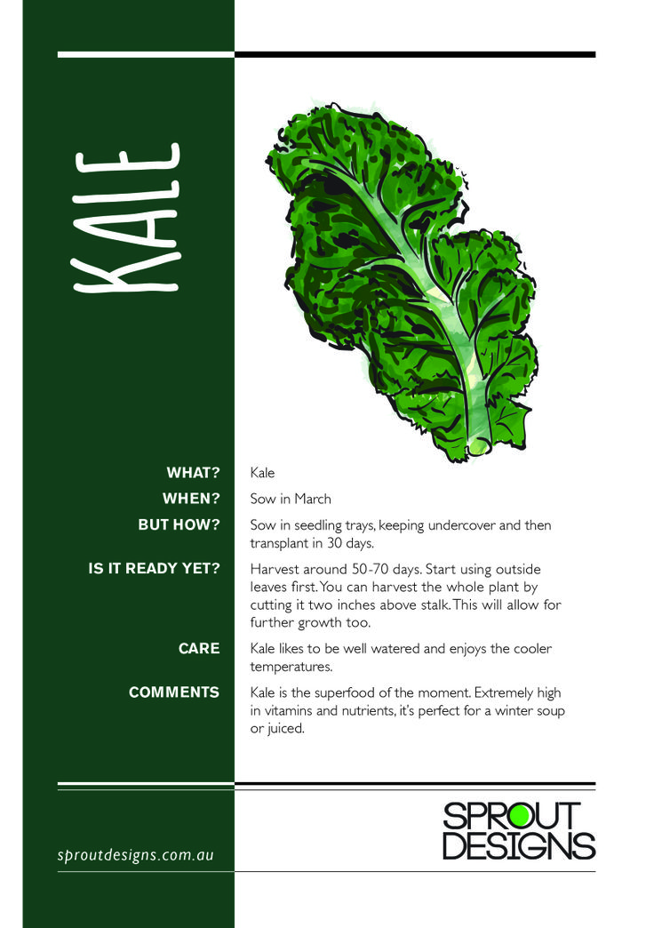 How to grow Kale!