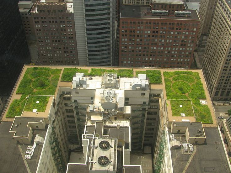 Chicago City Hall Green Roof. photo by TonyTheTiger, wikipedia #Green_Roof #Chicago_City_Hall_Green_Roof #TonyTheTiger: Green Roofs, Building, Greenroofs, Cities, Rooftop Gardens, Rooftops