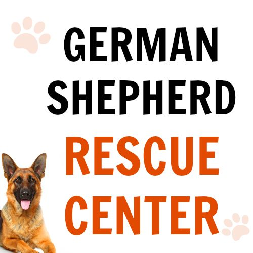 We have amazing news! Our GSD Rescue Center is now online :) You can find a list of all German Shepherd rescues in the World (we will expand our list over time): https://www.shepped.com/rescues/ P.S. If there's a rescue you know about and it's not on our list, please contact us! ‪#‎germanshepherd‬ ‪#‎gsd‬ ‪#‎dogadoption‬ #shepped
