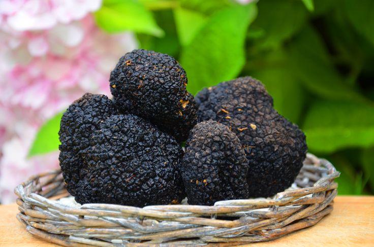 Tuber aestivum Vittadini - Black summer truffles