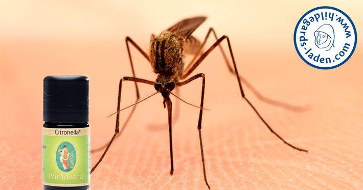 Natürlicher Insektenschutz