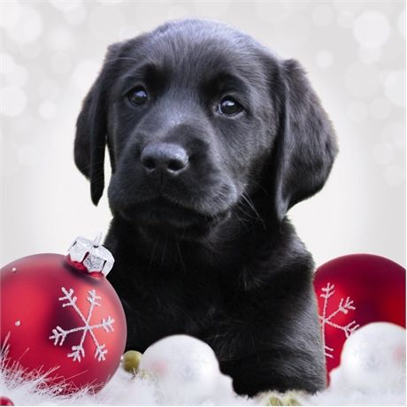 I Love Christmas Black Lab Puppy Holiday Dogs Labrador Retriever Dog Puppies Labs