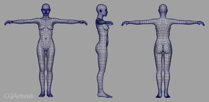 Image Plane / reference image for females 3d models