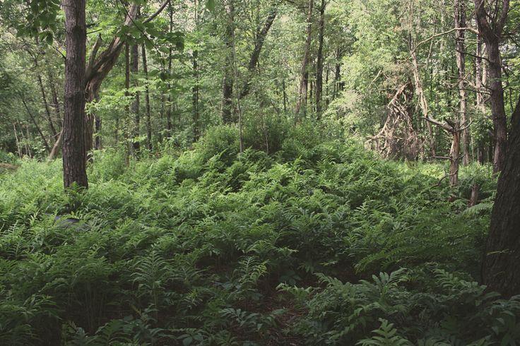 Fern Forest 2015