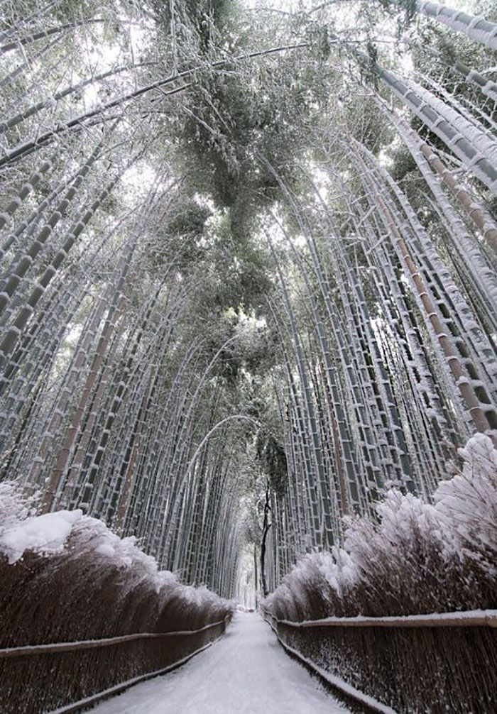 Heavy Snowfall In Kyoto