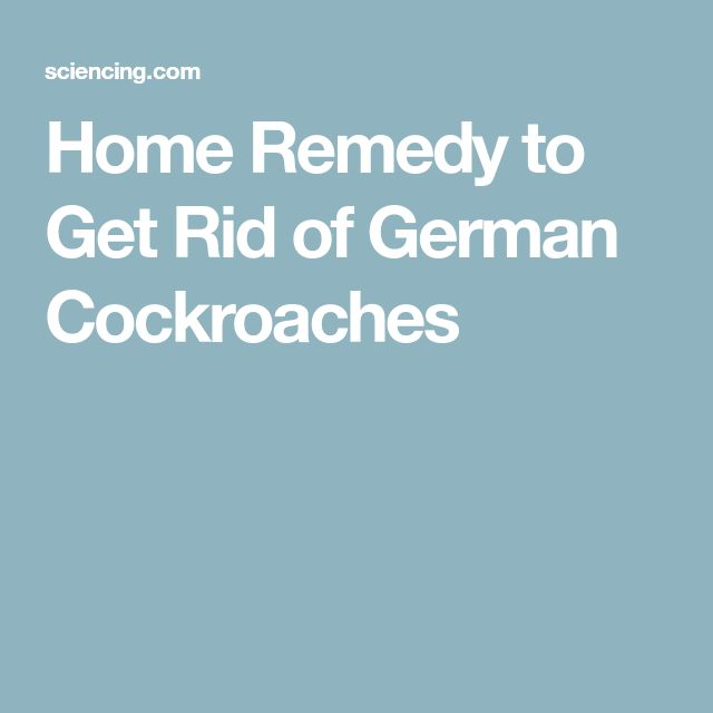 Home Remedy to Get Rid of German Cockroaches