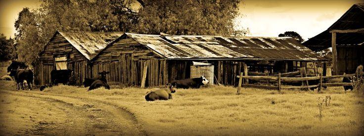Down at the Farm