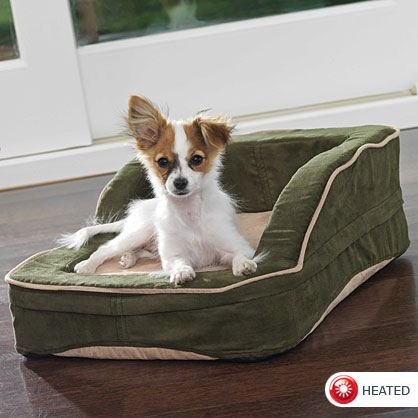 Transaminitis is the phrase which means higher levels of specified liver enzymes, that are identified as transaminases. http://liverbasics.com/transaminitis.html heated-dog-bed