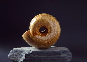 Precious Wooden Shell Inspired by Steven Garrison - Handmade by From A Seed Australia #timber #wooden #unique #handmade #art