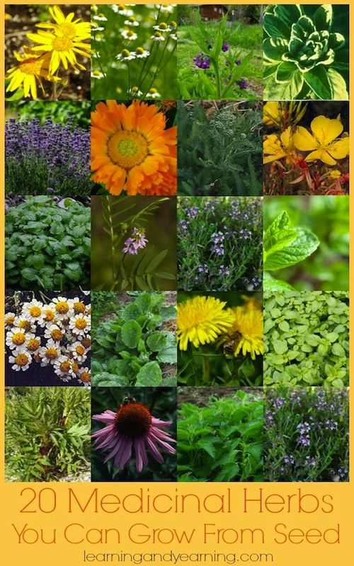 Is your local nursery's selection of medicinal herbs uninspiring? Thankfully, there are lots of medicinal herbs you can grow from seed.: