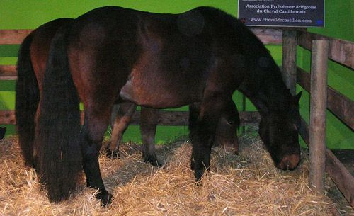Castilian Horse (Spain). Although some sources suggest that it is a present breed, the original Castilian horse is extinct. The Losino pony is the only breed of Castile nowadays.
