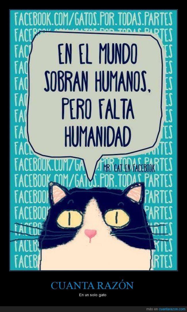 Un gato nos da lecciones de humanidad - En un solo gato   Gracias a http://www.cuantarazon.com/   Si quieres leer la noticia completa visita: http://www.estoy-aburrido.com/un-gato-nos-da-lecciones-de-humanidad-en-un-solo-gato/