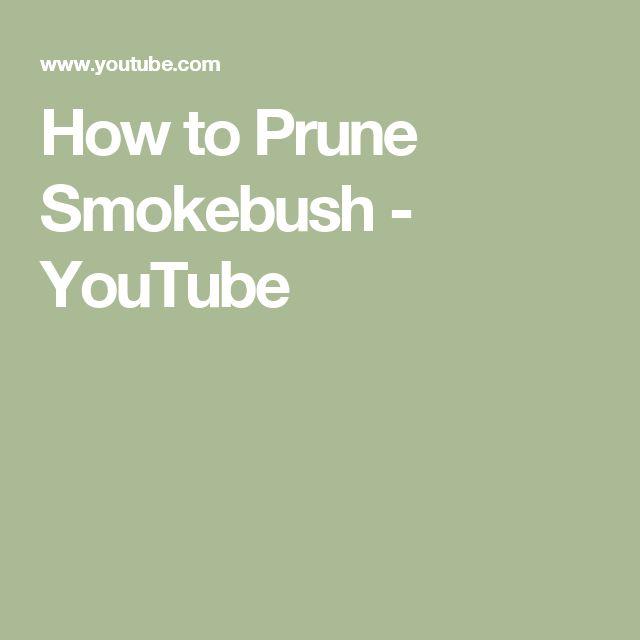 How to Prune Smokebush - YouTube