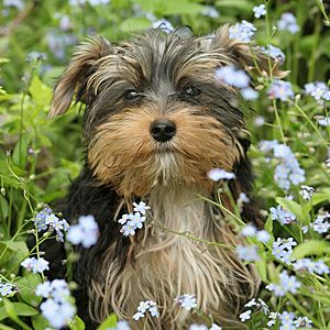 What Dog Breed is Right for Me - from Dogster!      http://www.dogster.com/dog-breeds/what-dog-breed-is-right-for-me