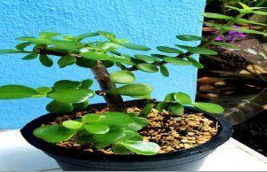 Esta planta hará que tus problemas económicos desaparezcan