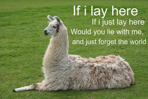 Hahhaha: Flames, Animals, Giggle, Alpacas, Funny Stuff, Llama Llama, Things, Snow Patrol