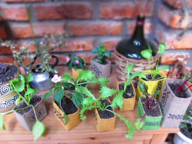 Disponibilidad de hortalizas y plantas de interios