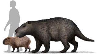 """""""Café Científico"""" con la historia del roedor gigante encontrado en Kiyú"""