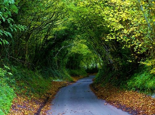 Walk with me on quiet feet    Through a tunnel of trees    Breathe with me the scented air    On a leaf strewn path    Gaze with me on the natural roof    Enclosing us like a lover's embrace: Favorite Places, Nature, Beautiful Places, Trees, Tree Tunnel, Photo, Roads