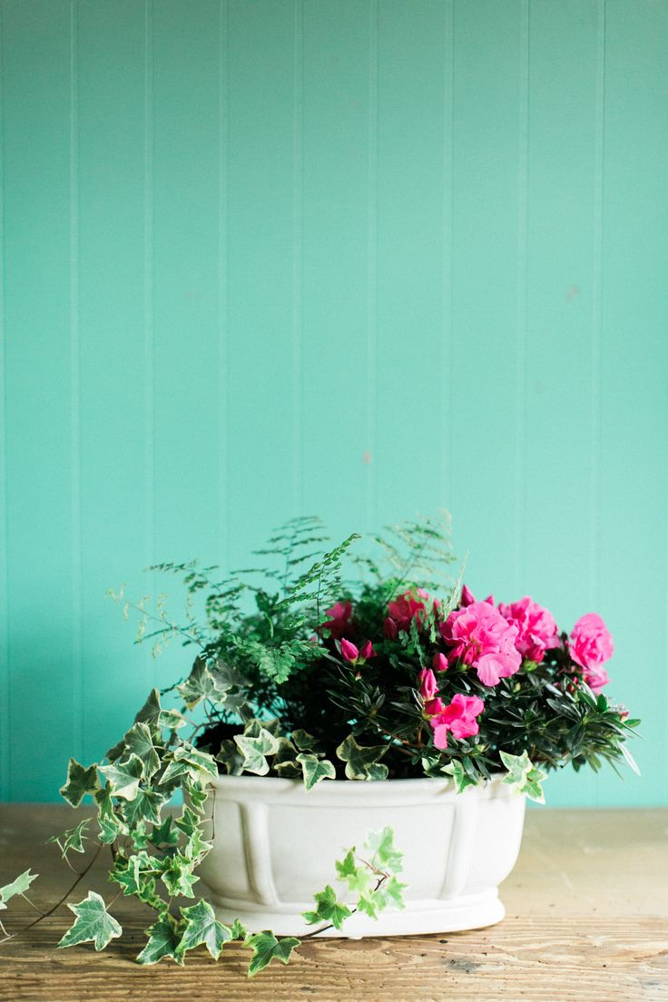 Azaleas Add The Perfect Amount Of Color To Any Room And This Simple Spring Container  Garden
