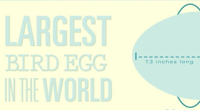 #Eggs #Infographic - A whole range of egg #facts packed in an infographic by the team over at Farm Flavor - http://www.finedininglovers.com/blog/food-drinks/food-infographic-eggs/