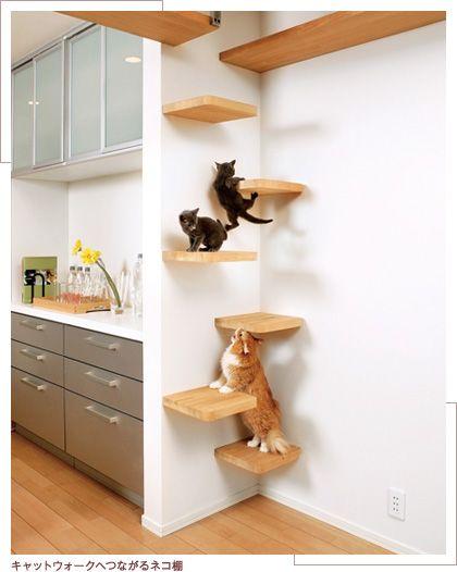 キャットウォークへつながるネコ棚 DUAL purpose home design...is it for knickknacks, books or CATS?!