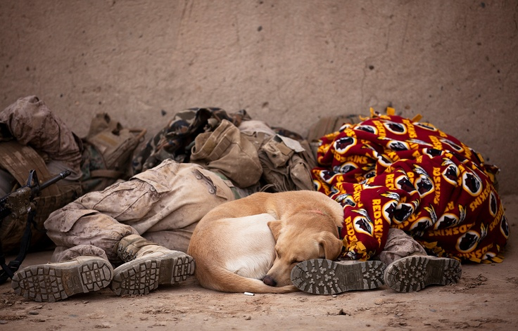 Let Sleeping Dogs Lie    All of the Marines and Afghan soldiers were exhausted, as were the IED detection dogs, so this trio decided to catch a quick nap.     photo by United States Marine Corps